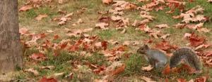 Boston Common Squirrel
