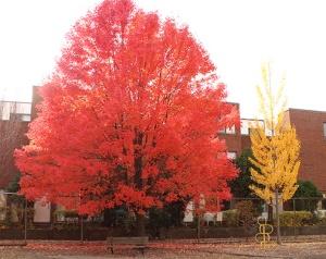 Tree Comparison
