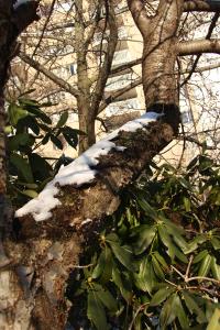 Tree Limb