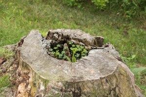 Life in Tree Stump