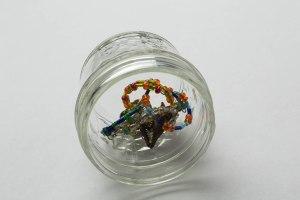 Rings in Jar