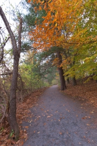 Path among Fall Trees