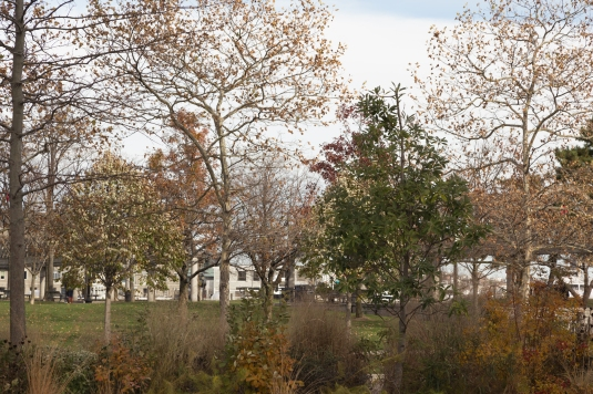Trees in Christopher Columbus Waterfront Park